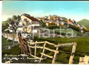 1954 MONTELEONE DI SPOLETO (PG) Panorama di campagna *Cartolina FG VG