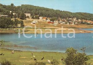 1976 COSENZA Veduta di LORICA nella SILA con caprette *Cartolina ANIMATA FG VG