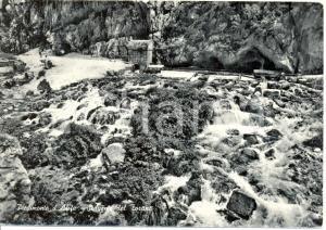 1958 PIEDIMONTE D'ALIFE (CE) La sorgente del TORANO * Cartolina FG VG