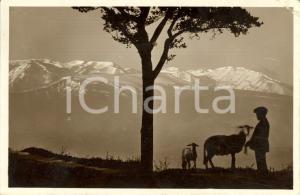 1929 CHIETI Veduta del massiccio della MAIELLA *ANIMATA con pastore FP VG
