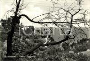 1960 ca CUPRA MARITTIMA (AP) Veduta panoramica del paese *Cartolina FG NV
