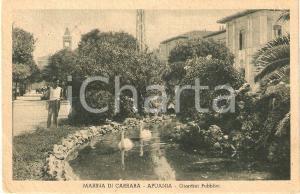 1947 MARINA DI CARRARA (MS) APUANIA Cigni ai Giardini Pubblici *Cartolina FP VG