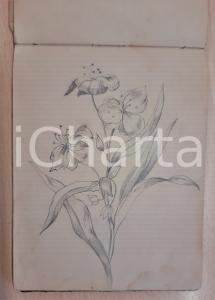 1864 Eugenia RODOLFI Album con 36 disegni di piante e paesaggi *A MANO MATITA