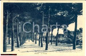 Abruzzo anni '40 - Pineto *La pineta animata - VG