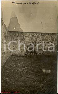 1923 MURAVERA (CA) Mufloni in campagna RARISSIMA FP VG