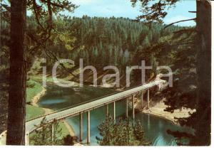1954 SPEZZANO DELLA SILA (CS) Ponte sul Lago Cecita *Cartolina FG VG