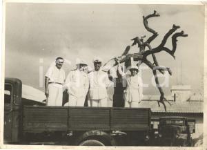 1940 NAPOLI Albero UAL UAL alla Triennale d'OLTREMARE