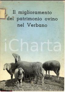 1941 Vittorio Di Martino PATRIMONIO OVINO NEL VERBANO