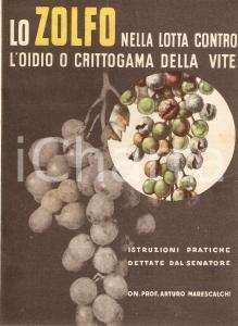 1937 Arturo MARESCALCHI Zolfo nella lotta contro oidio o crittogama della vite