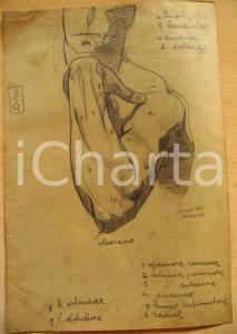 1927 Giuseppe MARETTO Studio per braccio umano AUTOG.