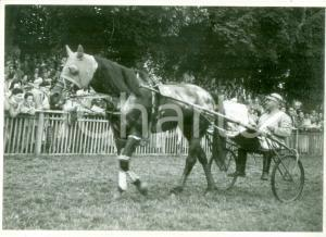 1950 SVIZZERA EQUITAZIONE Fantino con sulky sfila davanti al pubblico *Cartolina