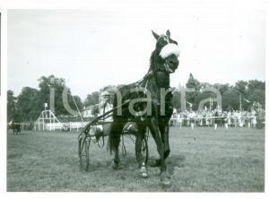 1955 ca SVIZZERA EQUITAZIONE Fantino al trotto con sulky Cartolina FG NV