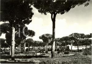 1954 MINTURNO (LT) Veduta della pineta *Cartolina FG VG