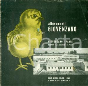 1958 VELLEZZO-BELLINI (PV) Allevamenti GIOVENZANO pollicoltura ILLUSTRATO