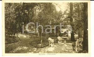 1936 MONZA Collegio BIANCONI - Giardino e chioschetto *Cartolina FP VG