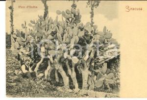 1900 ca SIRACUSA Fico d'India *Cartolina postale ANIMTA FP NV