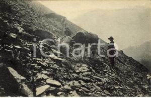1916 CASSANO ALLO IONIO (CS) Mucche al pascolo *Cartolina postale FP VG