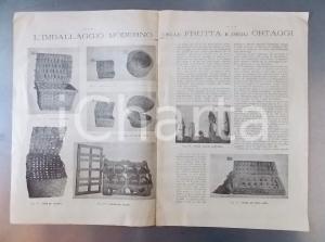 1890 ca CUNEO Commercio frutta e ortaggi - Imballaggio moderno ILLUSTRATO