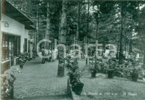 1951 SILA PICCOLA Pineta con i roseti Cartolina ANIMATA FG VG