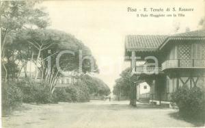 1917 PISA Regia tenuta di SAN ROSSORE Viale maggiore Cartolina FP VG