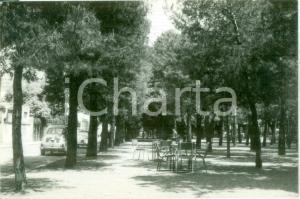 1952 GROTTAMMARE (AP) Pineta Viale Medaglie d'Oro CRUCIOLI *Cartolina FG VG
