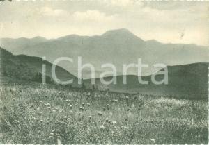 1961 CINGOLI (MC) Veduta panoramica con Monte SAN VICINO Cartolina postale FG VG