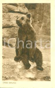 1935 ca ROMA Giardino zoologico L'orso bruno *Cartolina postale FP NV