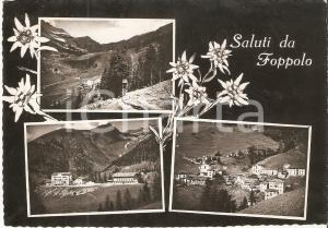 1953 FOPPOLO (BG) Vedutine del paese con stelle alpine *Cartolina FG VG