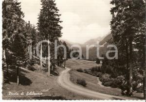 1958 SCHILPARIO (BG) Panorama della pineta *Cartolina FG VG