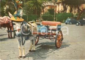 1967 RAPALLO (GE) Asino con cappellino traina calesse *Cartolina FG VG