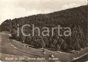1953 OVINDOLI (AQ) Panorama della pineta *Cartolina DANNEGGIATA FG VG