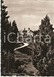 1955 BOSCO CHIESANUOVA (VR) Panorama con sentiero *Cartolina FG VG