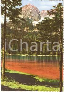 1960 ca TUENNO (TN) Lago rosso di TOVEL nel Gruppo del BRENTA *Cartolina FG NV