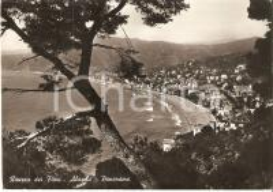 1960 ALASSIO (SV) Panorama con pino marittimo - Riviera dei Fiori *Cartolina FG