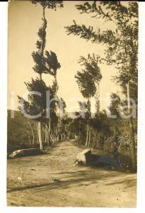 1916 SAVONA Un sentiero di campagna *Cartolina postale RARA FP VG