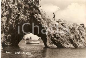 1955 ca ISOLA DI PONZA (LT) Tuffatore allo Scoglio di FRISIO *Cartolina FG NV