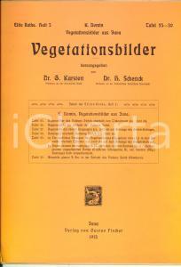 1913 K. DOMIN Vegetationsbilder aus JAVA Tafel 25-30 *Gustav Fischer JENA