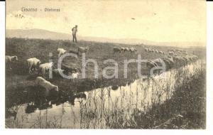 1920 LIVORNO Un pascolo nei dintorni *Cartolina ANIMATA VINTAGE FP VG