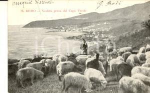 1907 SANREMO (IM) Veduta dal CAPO VERDE *Cartolina ANIMATA pastori FP VG
