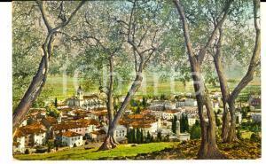 1919 ARCO (TN) Blick vom Olivenhain *Cartolina postale FP VG