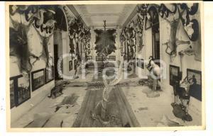 1940 ca PADOVA Palazzo DOLFIN BOLDU' - Museo di caccia grossa *Cartolina FP NV