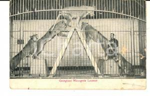 1910 ca FRANCE CIRCUS Dompteur GEORGIANO - Ménagerie LAURENT Carte postale FP NV