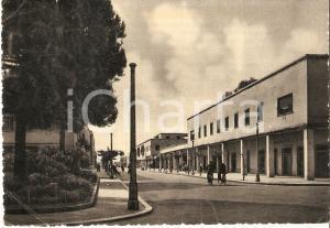 1951 SABAUDIA (LT) Operai in bicicletta su Corso Vittorio Emanuele *Cartolina FG