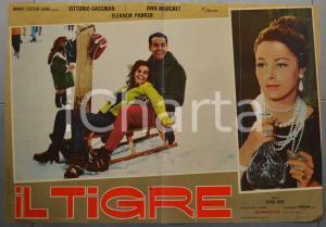 1967 IL TIGRE Dino RISI Vittorio GASSMAN Ann MARGRET Fotobusta 60x40 cm