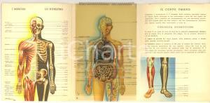 1940 MILANO CO-FA Il corpo umano - Pieghevole pubblicitario ill. A. POMI