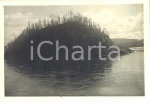 1930 SIBERIA (URSS) Fiume ENISEJ - Veduta della taiga *Foto 14x10 cm