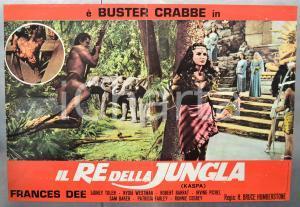 1960ca KASPA IL RE DELLA JUNGLA Buster CRABBE Frances DEE Fotobusta DANNEGGIATA