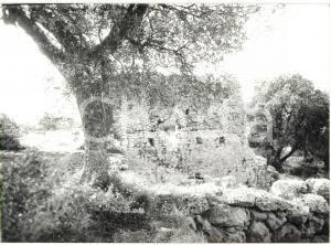 1979 COSA (GR) Scavi archeologici - Veduta sui resti della curia *Foto 18x13