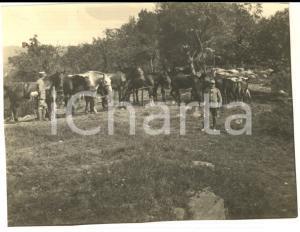 1917 WW1 ZONA DI GUERRA Pascolo per cavalli al riparo dagli austriaci *Foto 10x8