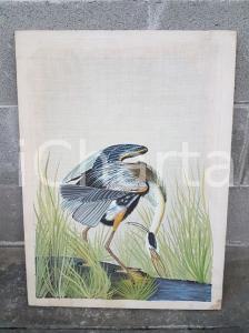 1975 CINA VINTAGE Uccello trampoliere piumaggio grigio azzurro - quadro 42x57 cm